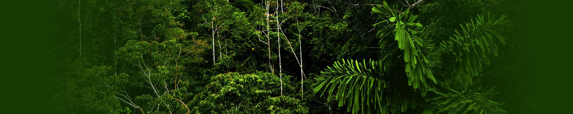 regenwoud_duurzaam_bovenkamers
