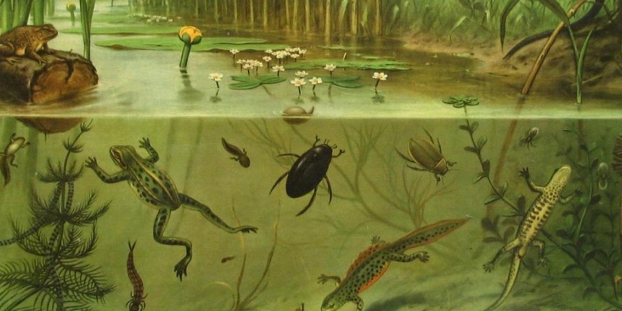 Achteruitgang biodiversiteit onzichtbaar voor hersenen